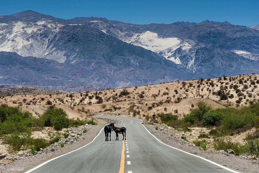 horses on road ruta 40